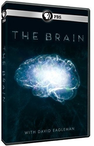 Brain with David Eagleman