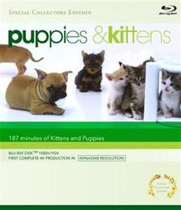 Puppies & Kittens