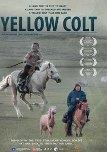Mongolian Invasion: Yellow Colt