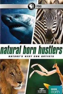 Nature: Natural Born Hustlers