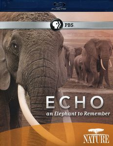 Echo: An Elephant to Remember