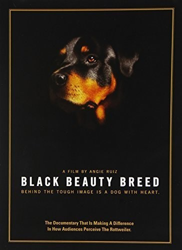Black Beauty Breed