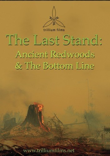The Last Stand: Ancient Redwoods and the Bottom Line