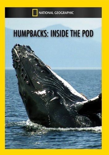 Humpbacks: Inside the Pod