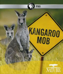 Nature: Kangaroo Mob