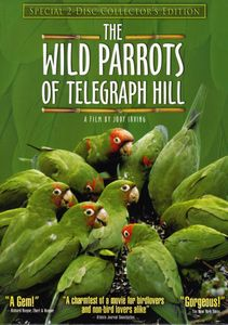 Wild Parrots of Telegraph Hill