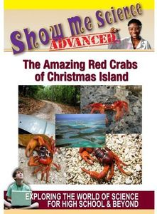 Amazing Red Crabs of Christmas Islands
