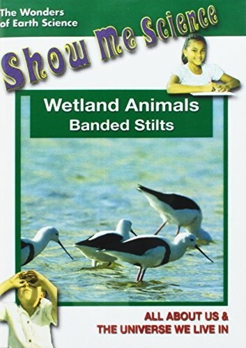 Wetland Animals - Banded Stilts