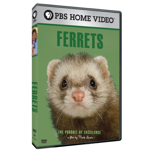 Pursuit of Excellence: Ferrets
