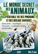 La Vie Des Pingouins Et Oiseaux Sau