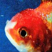 Big Fish Theory [Explicit Content] , Vince Staples
