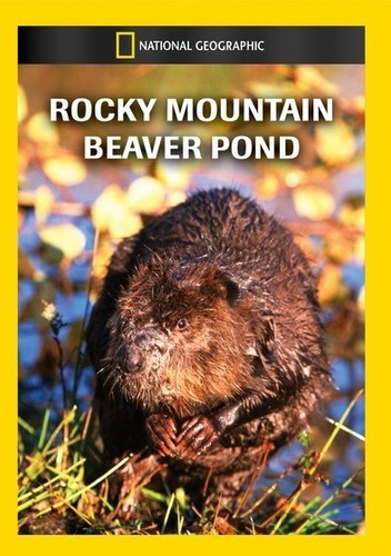 Rocky Mountain Beaver Pond