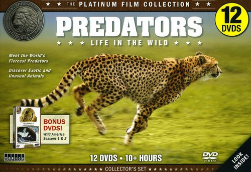 Predators Life in the Wild