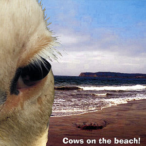 Mikesell, Mickey : Cows on the Beach!