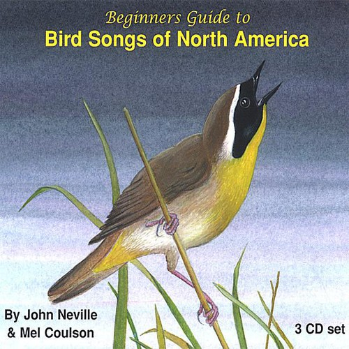 Beginners Guide to Bird Songs of North America