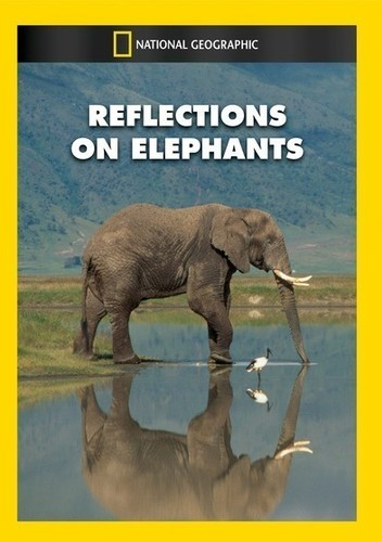 Reflections on Elephants