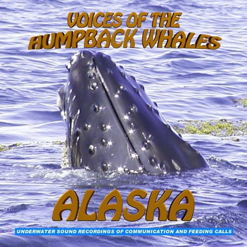 Voices of the Humpback Whales Alaska