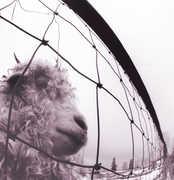 Vs , Pearl Jam
