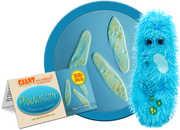 Paramecium: Paramecium Caudatum (Giant Microbes)|
