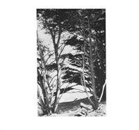 Rick Deitrick - Gentle Wilderness