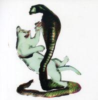 Les Savy Fav - Cat and The Cobra