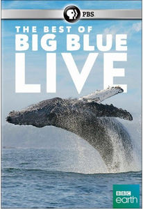 The Best of Big Blue Live