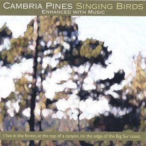 Cambria Pines Singing Birds