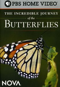 The Incredible Journey of the Butterflies