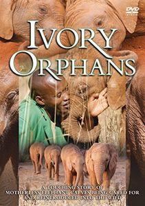 Ivory Orphans