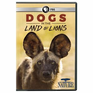 Nature: Dogs in the Land of Lions