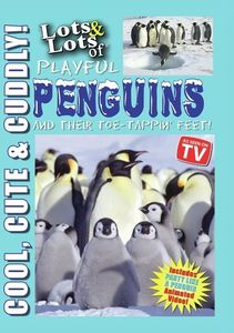 Lots and Lots of Playful Penguins