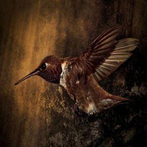 Keep Humming Bird