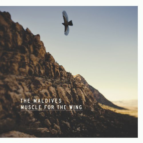 Muscle for Wing