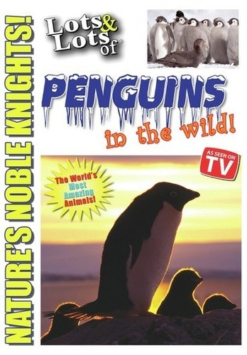 Lots and Lots of Penguin in the Wild