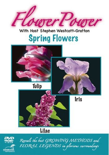 Flower Power: Spring Flowers