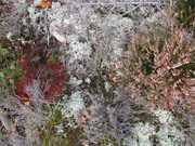 Mycorrhizae Realm