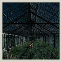 Foxing - Dealer [Vinyl]