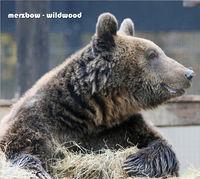 Merzbow - Wildwood
