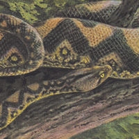 Rainforest Spiritual Enslavement - Ambient Black Magic