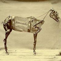 Chadwick Stokes - The Horse Comanche [Import]