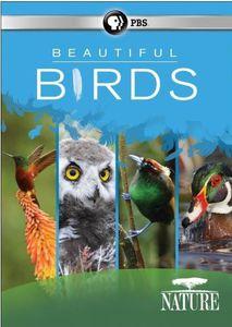 Nature: Beautiful Birds