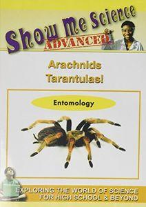 Arachnids - Tarantulas