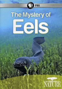 The Mystery of Eels