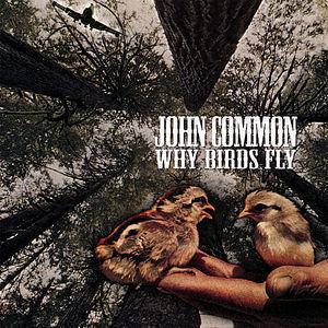 Why Birds Fly