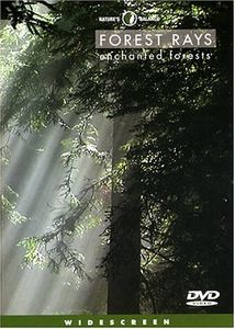 Nature's Balance: Forest Rays