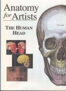 Anatomy for Artists - The Human Head
