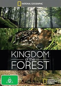 Kingdom of the Forest [Import]