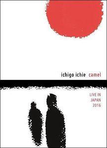 Ichigo Ichie: Camel Live in Japan [Import]