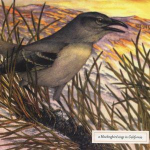 Mockingbird Sings in California