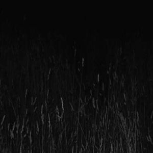 White Nights /  Drone Fields